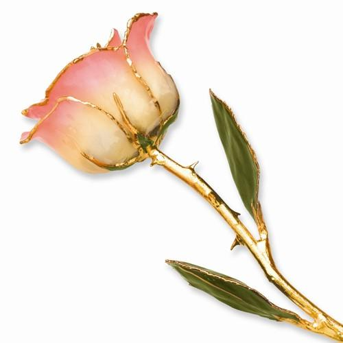 Lacquer Dipped Gold Trim White Pink Rose